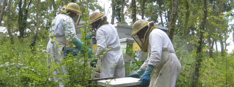 Stage d'apiculture